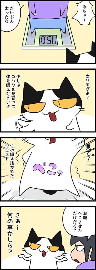 【猫マンガ-9話】コハクのウエスト