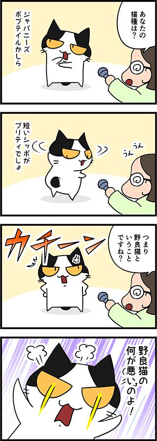 【猫マンガ-13話】コハクのインタビュー