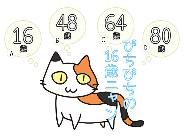 【猫クイズ-第11問】16歳のミケ猫は、人間でいうと何歳ぐらい?