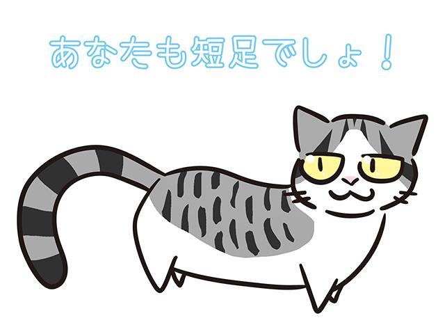 【猫クイズ-第13問】この手足の短い猫は何?