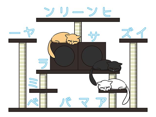 【猫クイズ-第14問】猫が3匹隠れています。何という種類の猫か?