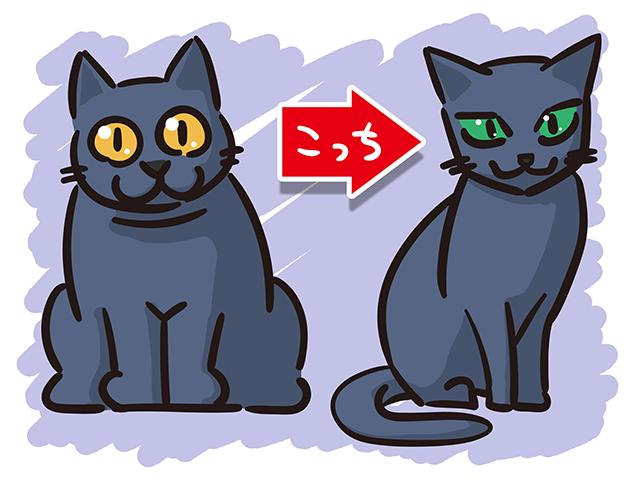 【猫クイズ-第20問】ロシアンブルーはどっち?