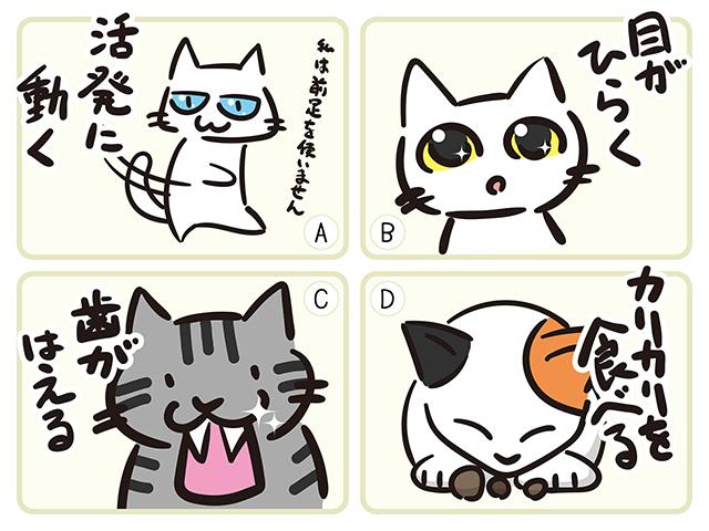 【猫クイズ-第24問】子猫の成長過程を正しい順に並べなさい