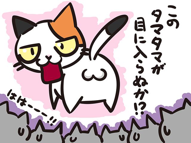 【猫クイズ-第30問】三毛猫のオスが誕生する確率は?