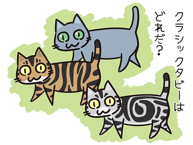 【猫クイズ-第32問】クラシックタビーの模様をした猫はどれか?