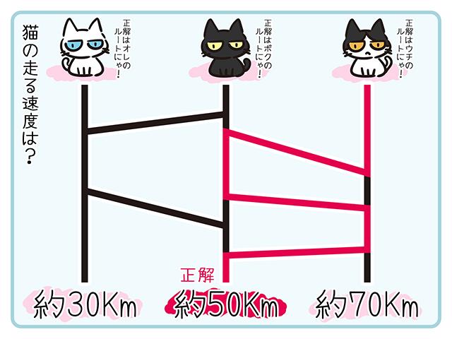【猫クイズ-第35問】猫の走る速度は?正しいルートを選べ!