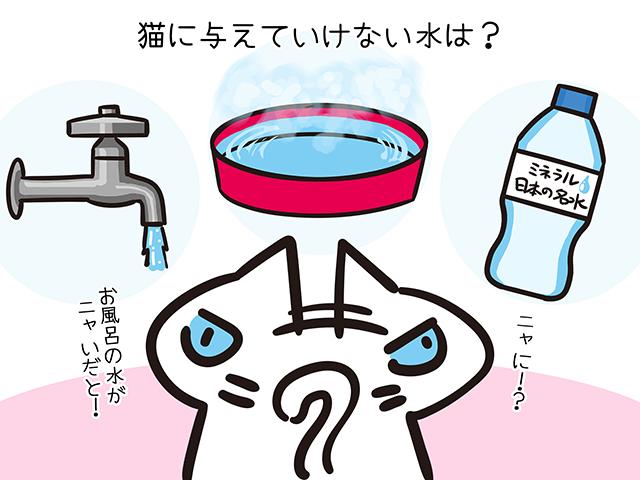 【猫クイズ-第37問】猫に与えていけない水は?