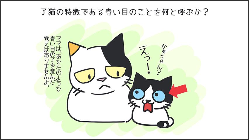 【猫クイズ-第1問】子猫の特徴である青い目のことを何と呼ぶか?