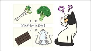 【猫クイズ-第2問】猫に与えていい食べ物は?