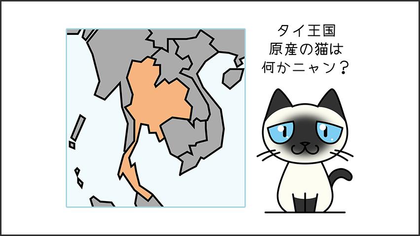 【猫クイズ-第4問】タイ王国原産の猫を何というか?