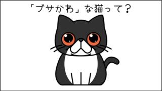 【猫クイズ-第7問】このブサかわな猫の名前は何?