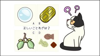 【猫クイズ-第8問】猫のまつわることわざで正しいのはどれだ?