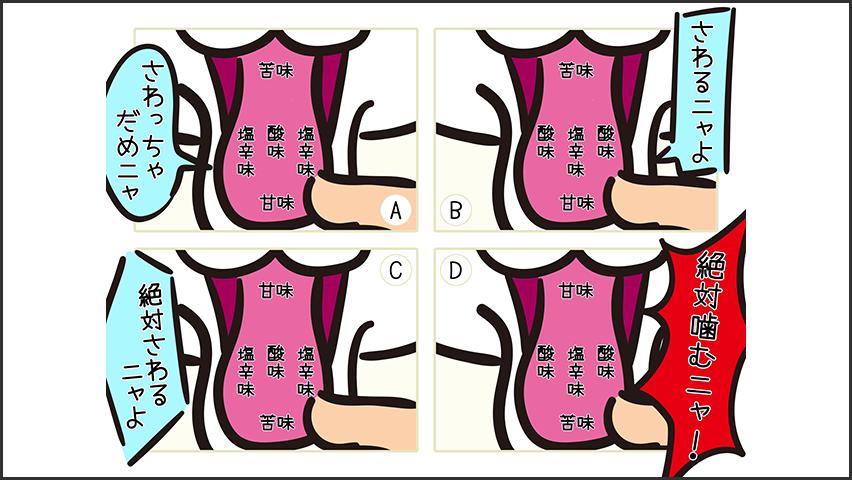 【猫クイズ-第21問】猫の舌(味覚)で正しいのはどれ?