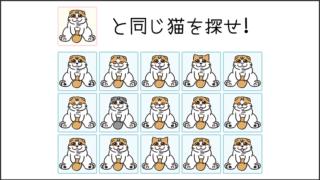 【猫クイズ-第22問】同じスコティッシュフォールドを探せ!