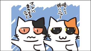 【猫クイズ-第25問】周りが暗いときの猫の目はどっち?