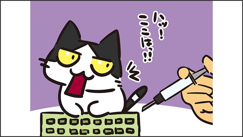 【猫クイズ-第28問】3種混合ワクチンで予防できる病気をすべて答えよ