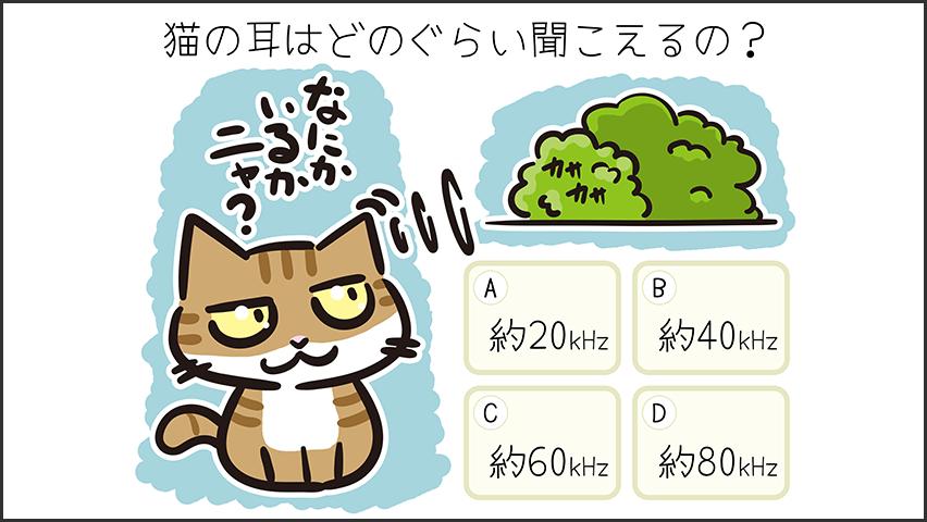 【猫クイズ-第29問】猫の耳はどれぐらい聞こえているの?