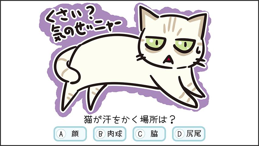 【猫クイズ-第31問】猫が汗をかく場所は?