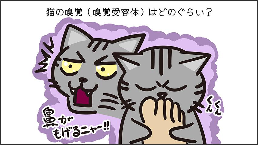 【猫クイズ-第34問】猫の嗅覚(嗅覚受容体)はどのぐらい?
