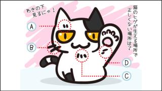 【猫クイズ-第36問】猫のヒゲが生える場所で正しくない場所は?