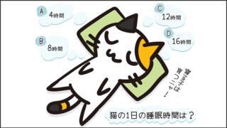【猫クイズ-第38問】猫の1日の睡眠時間は?