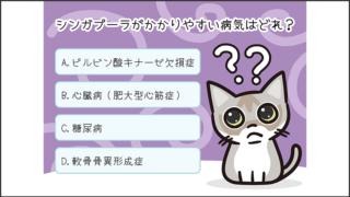 【猫クイズ-第40問】シンガプーラがかかりやすい病気はどれ?