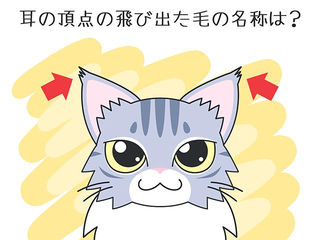 【猫クイズ-第41問】耳の頂点の飛び出た毛の名称は?