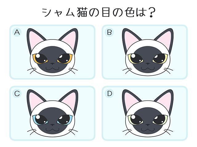 シャム猫の目の色は?