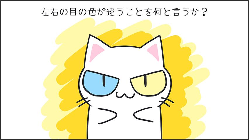 【猫クイズ-第44問】左右の目の色が違うことを何と言うか?