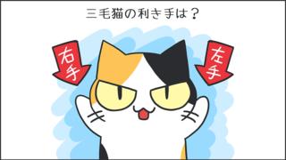 【猫クイズ-第45問】三毛猫の利き手は?
