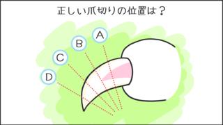 【猫クイズ-第47問】正しい爪切りの位置は?