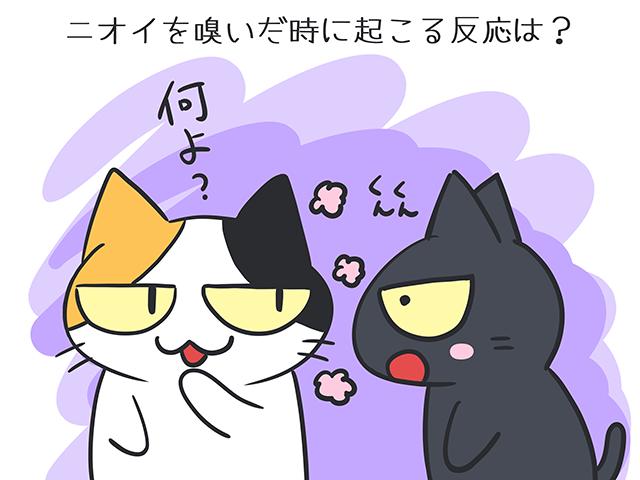【猫クイズ-第49問】ニオイを嗅いだときに起こる反応は?