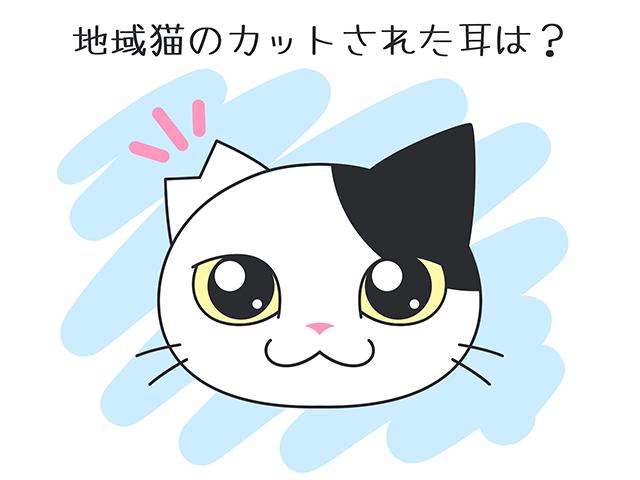 【猫クイズ-第50問】地域猫のカットされた耳は?